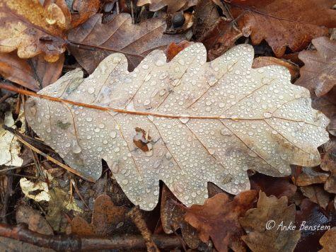 Benstem Reisefeder Harz Regenstein Blatt