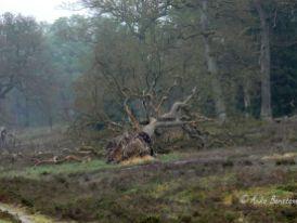 Reisefeder Göhrde Wolfstour Wolfsberater Wald Niedersachsen Benstem 10