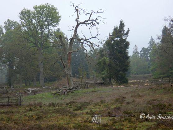 Reisefeder Göhrde Wolfstour Wolfsberater Wald Niedersachsen Benstem 11