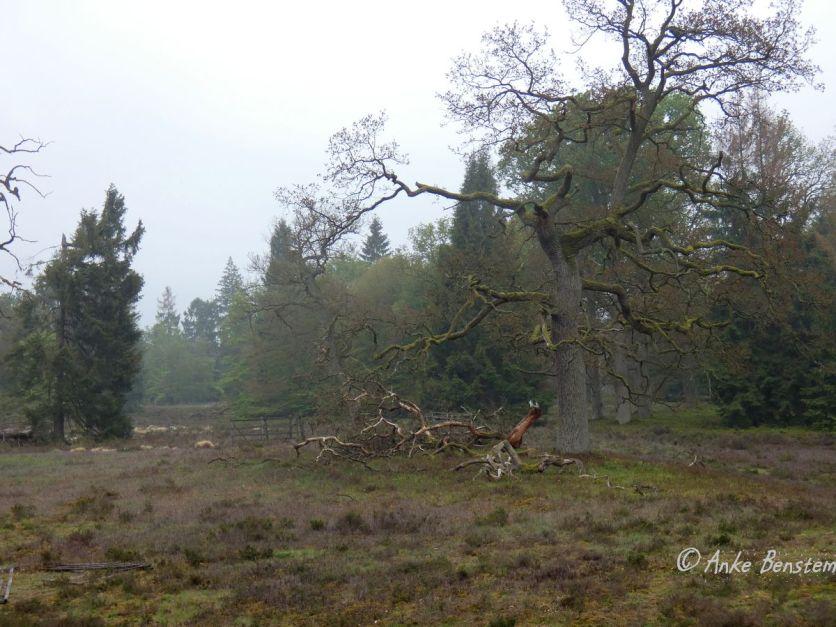 Reisefeder Göhrde Wolfstour Wolfsberater Wald Niedersachsen Benstem 12