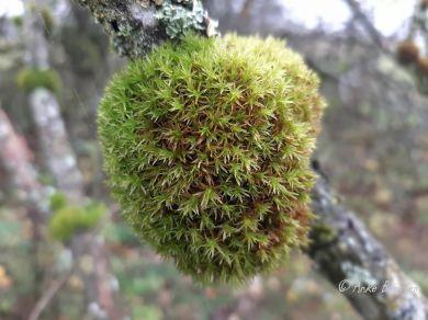 Benstem Reisefeder Hunsrück Laub Herbst Baum Moos