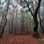 Im Wildkatzen-Urwald: Unterwegs auf dem Saar-Hunsrück-Steig