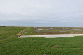 zugvogel-nordsee-tag2-DSC01013-1k2