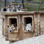 Norwegen: Sven und die Huskys