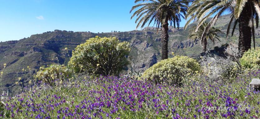 Reisefeder La Gomera Karin Kura Berge Palmen Blumen