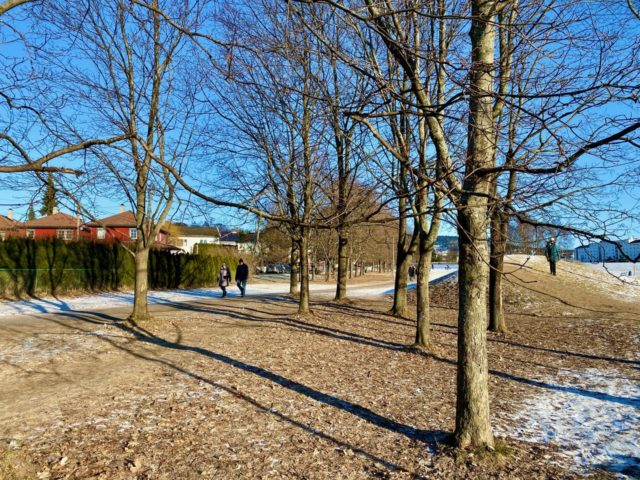 Turløype rundt Voldsløkka i Oslo