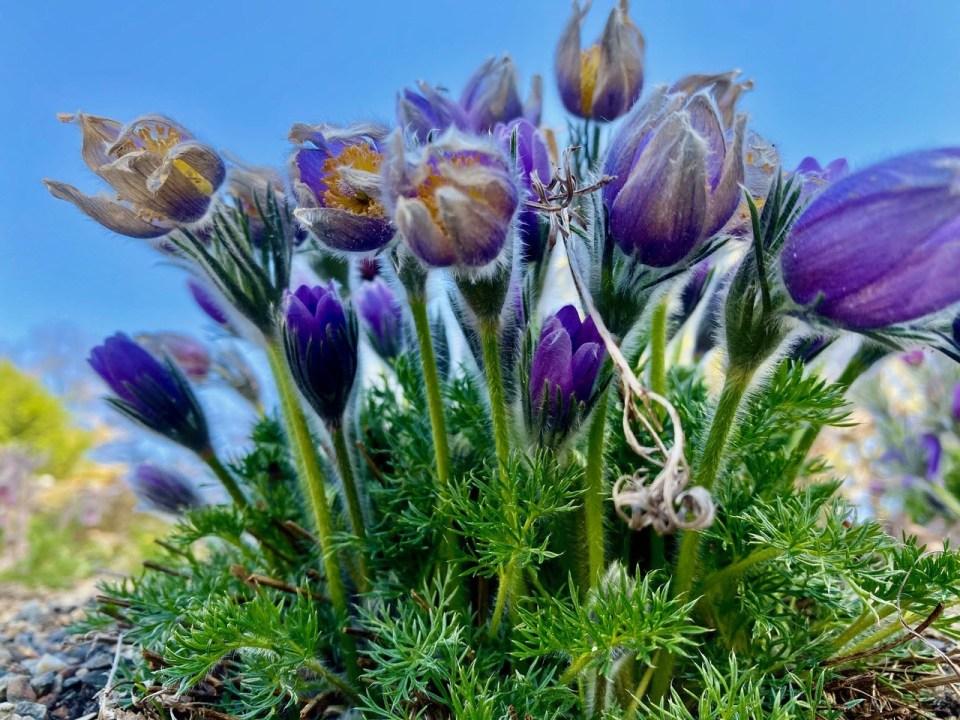 Blomster botanisk hage