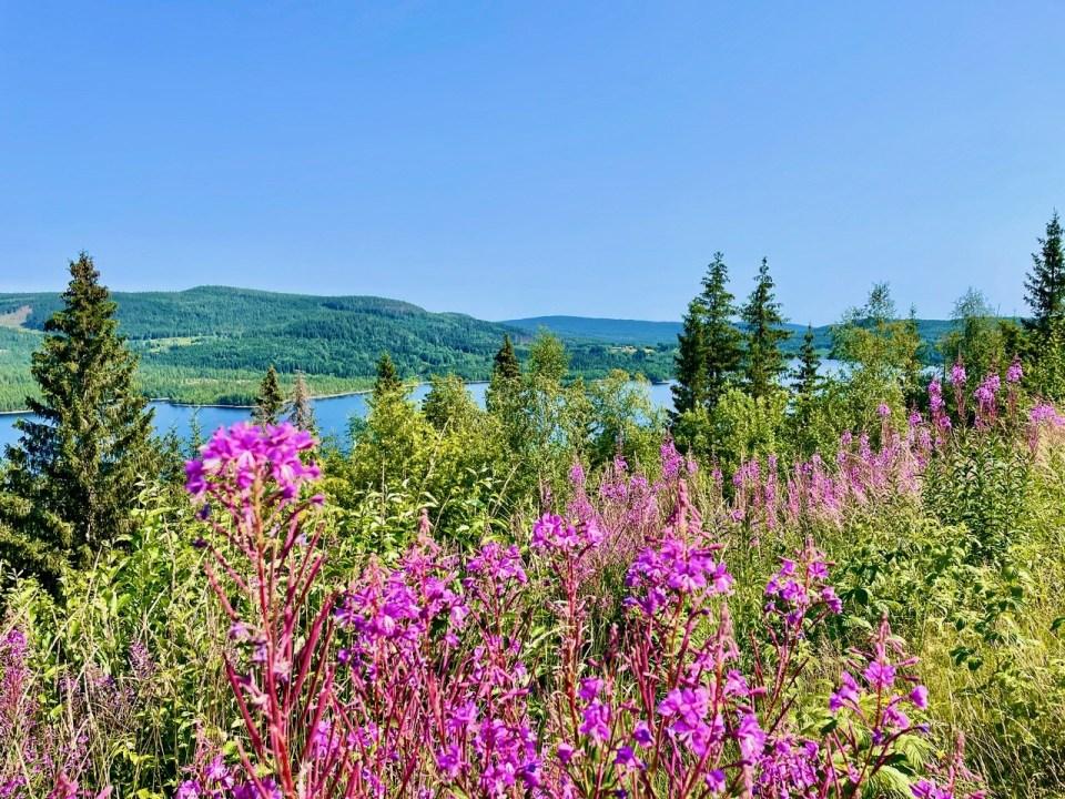 Utsikt fra Finnskogtoppen