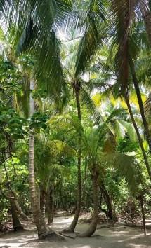 59 - tayrona nationalpark_kolumbien (621x1024)