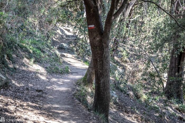 Sti gjennom skogen til Monterosso