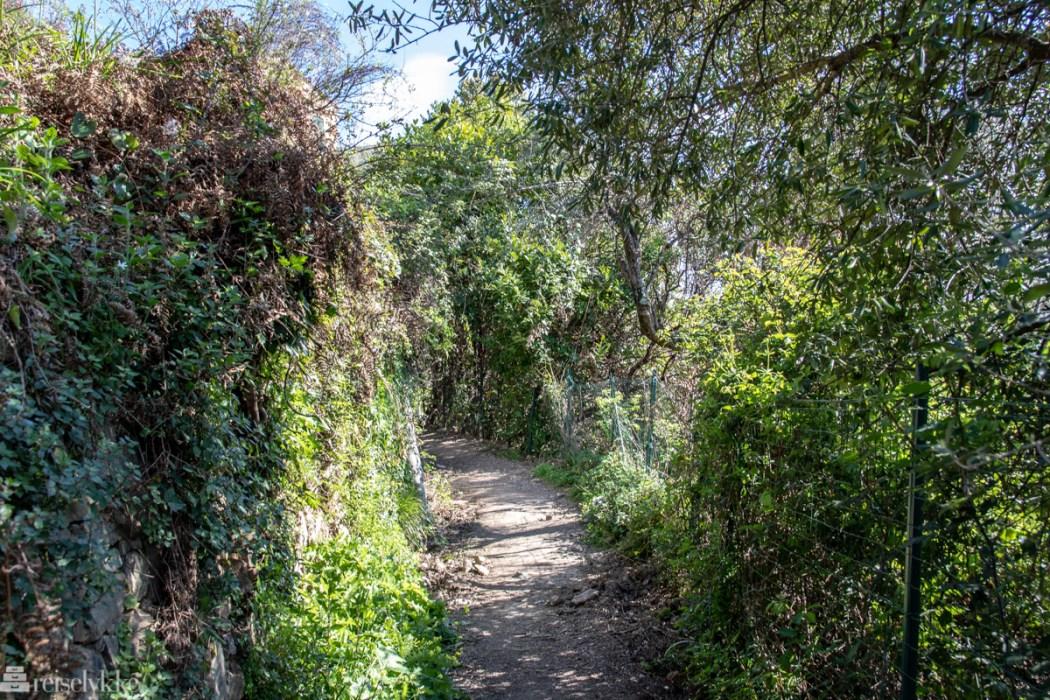 Sti i det grønne_Levanto - Monterosso