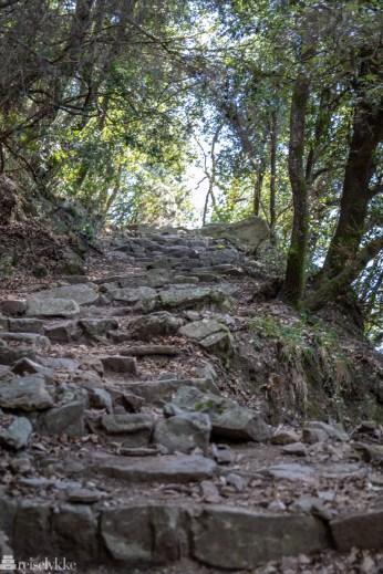 Trappelagt sti i skog Levanto - Monterosso