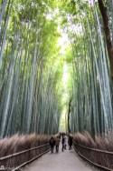Arashiyama zbambusskog