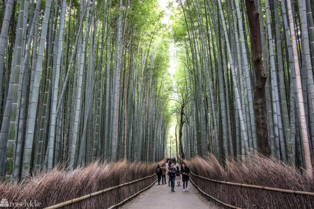 sti i Arashiyama bambusskog