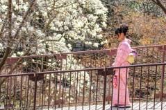 blomstring i Kyoto