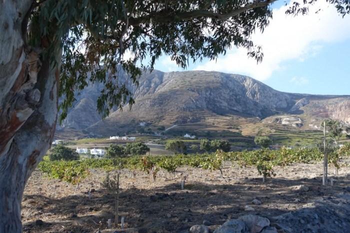 vin på sardinia