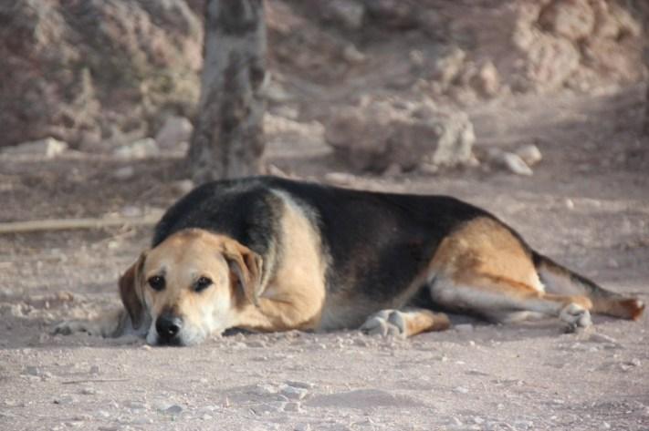I Athen er det hunder over alt - og athenerne elsker dem!