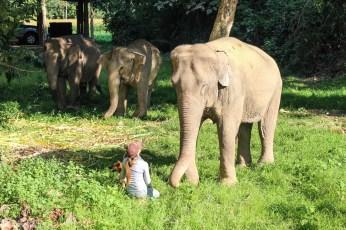 Elefanter i Thailand: Boon Lott's Sanctuary