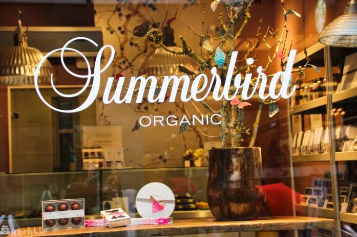 Ålborg: Summerbird vindusutstilling