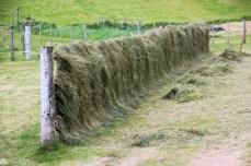 Landbruk på Færøyene