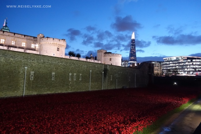 The Poppies by the Tower of London