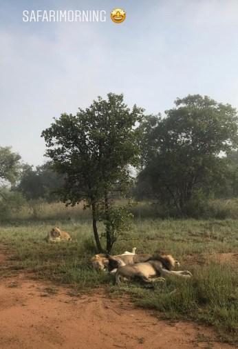 Safarimorgen