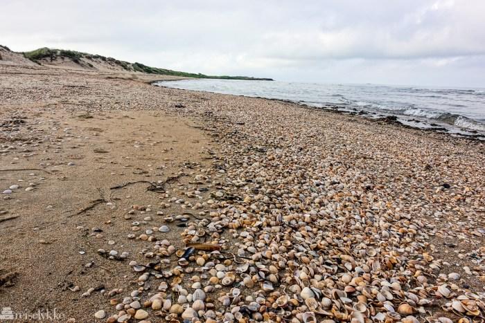 Strand ved Falkenberg