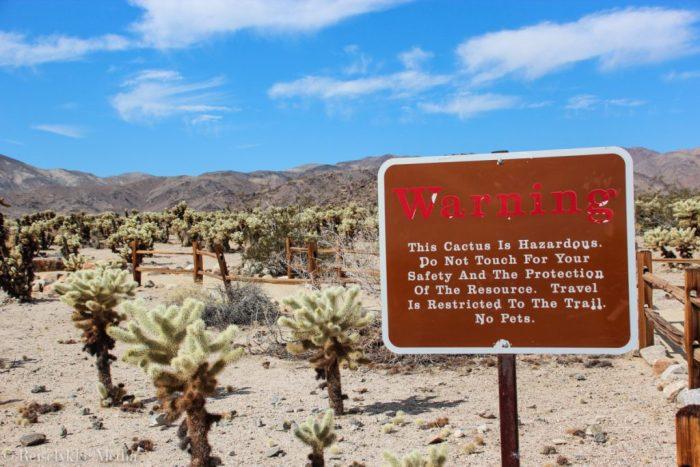 Skilt ved Cholla Cactus Garden i Joshua Tree National Park