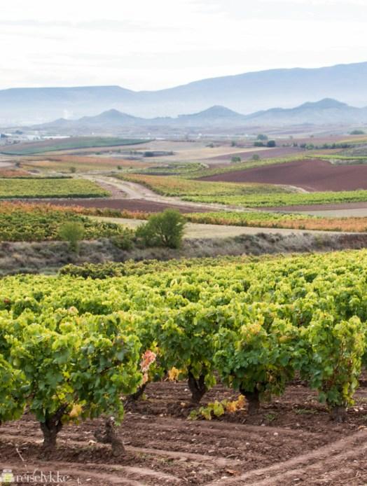 Vinmarker i La Rioja