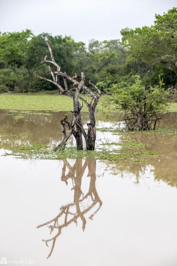 Wilpattu National Park Sri Lanka