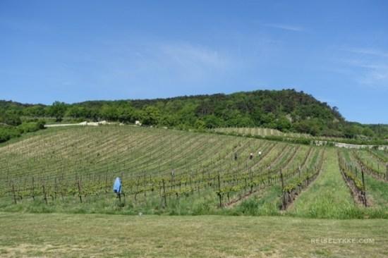 Wien, vinmarker