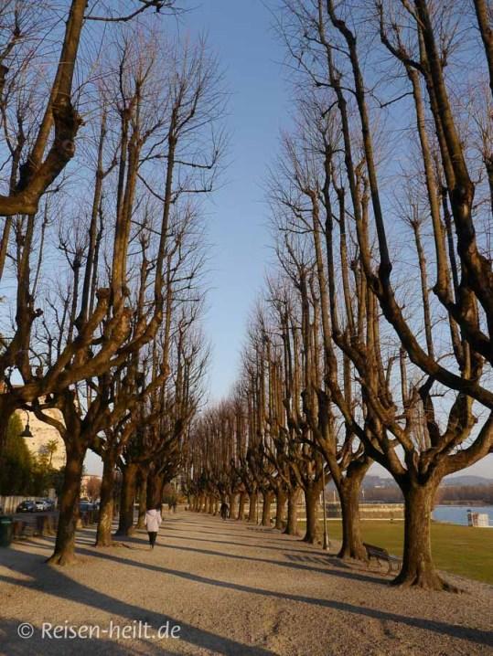Angera im Winter - Seepromenade mit kahlen Bäumen.