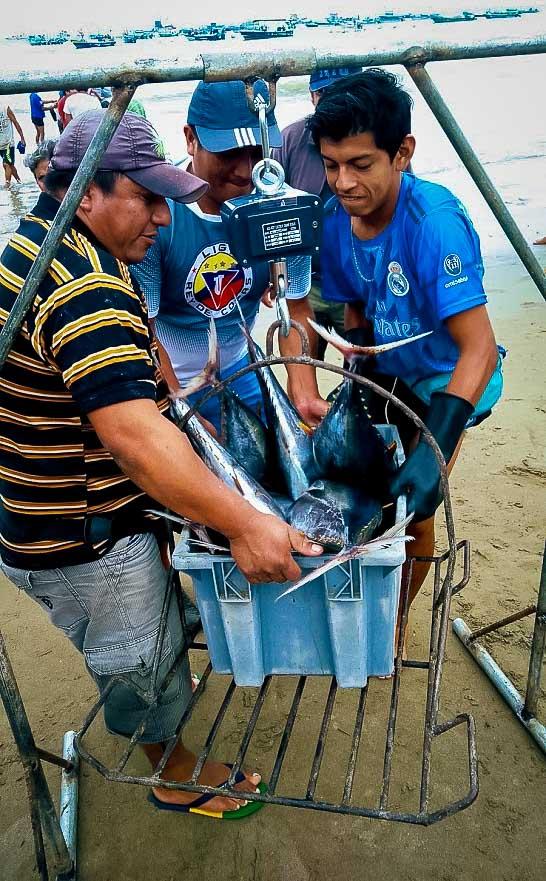 Fischmarkt in Puerto Lopez
