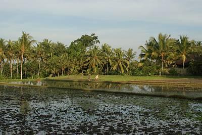 Reisplantage beim Hotels Chedi in Ubud