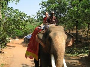 Ela hoch zu Elefant