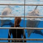 Oceanogràfic - Delfinshow