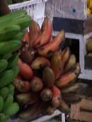 staude roter banane