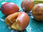tomate de arbol