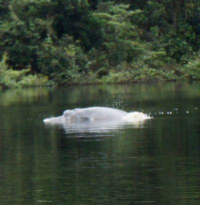 Delfine in der Lagune