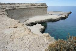 Seelöwenkolonie bei Puerto Piramides (1)