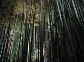 Kodaiji, Kyōto