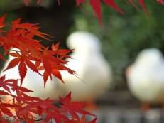 Ryōan-ji, Kyōto
