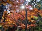 Yoshiki-en Gardens, Nara
