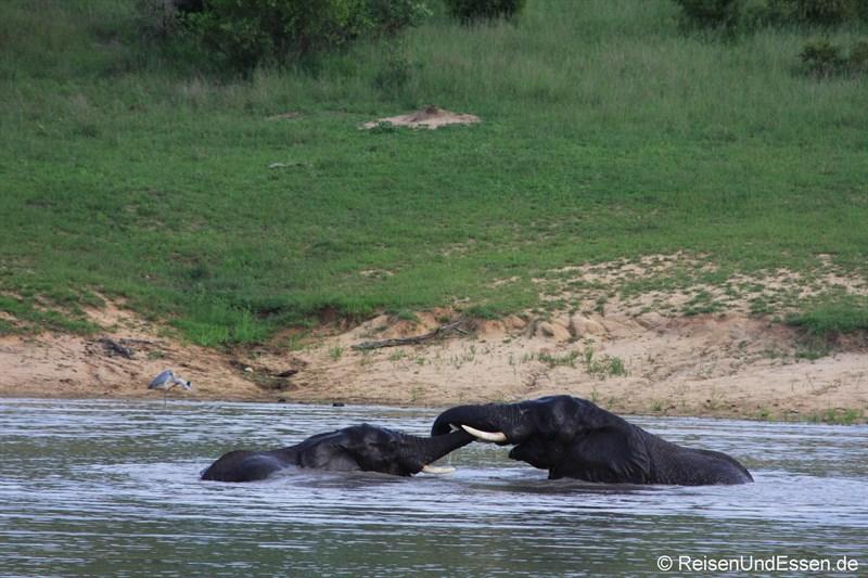 Babyelefanten beim Spiel im Wasserloch