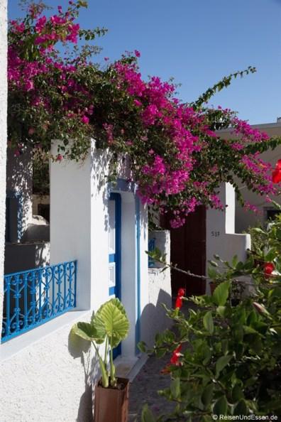 Haus mit blühenden Pflanzen