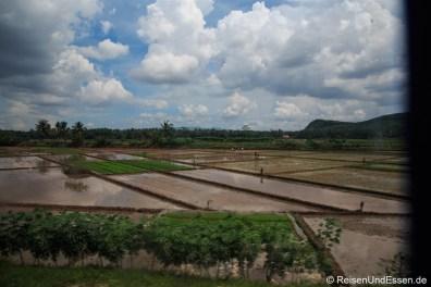 Blick auf Reisfelder mit Wasser