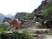 oder Ponys um den Berg zu bezwingen. ;-)