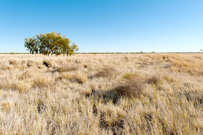 Das Barkly Tableland im Northern Territory