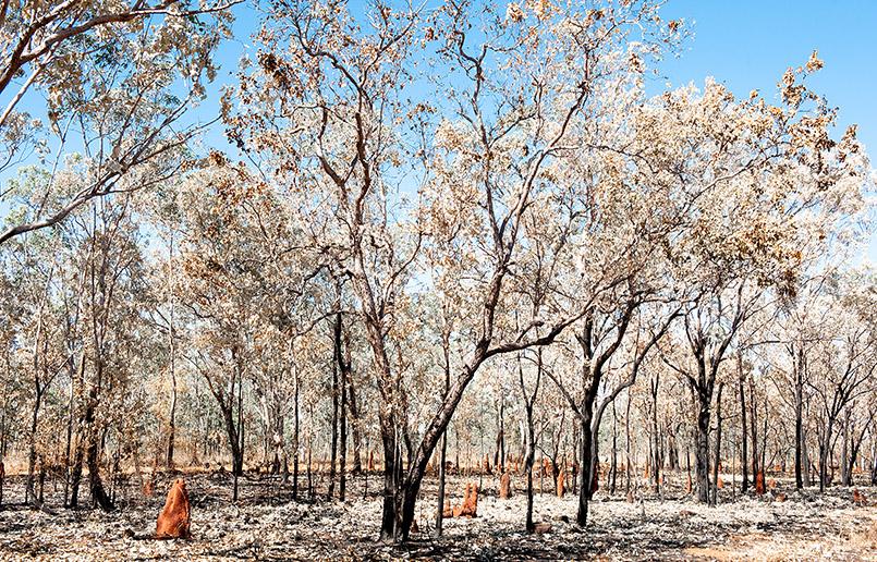 Unterwegs begegnen uns bizarre Landschaften - hier hatte es kürzlich gebrannt.