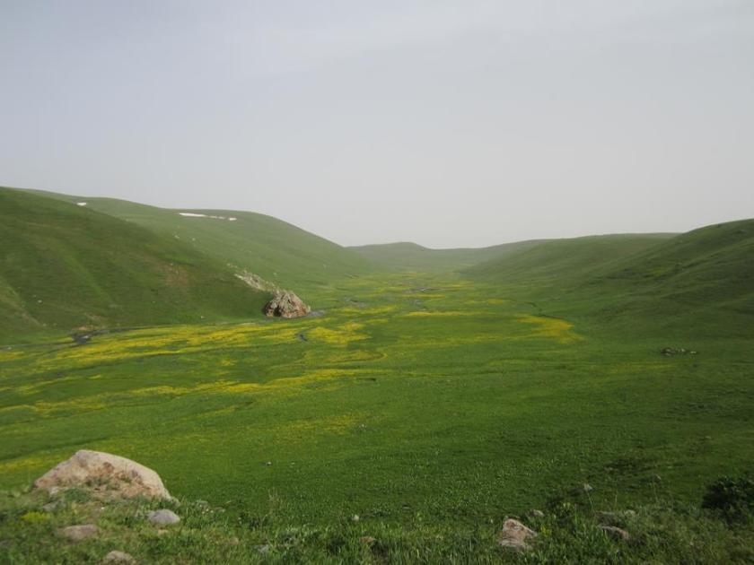 Vielfältige Botanik Armeniens